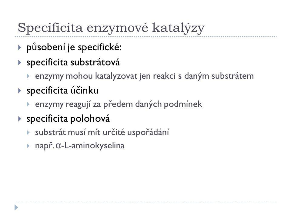 Specificita enzymové katalýzy  působení je specifické:  specificita substrátová  enzymy mohou katalyzovat jen reakci s daným substrátem  specifici