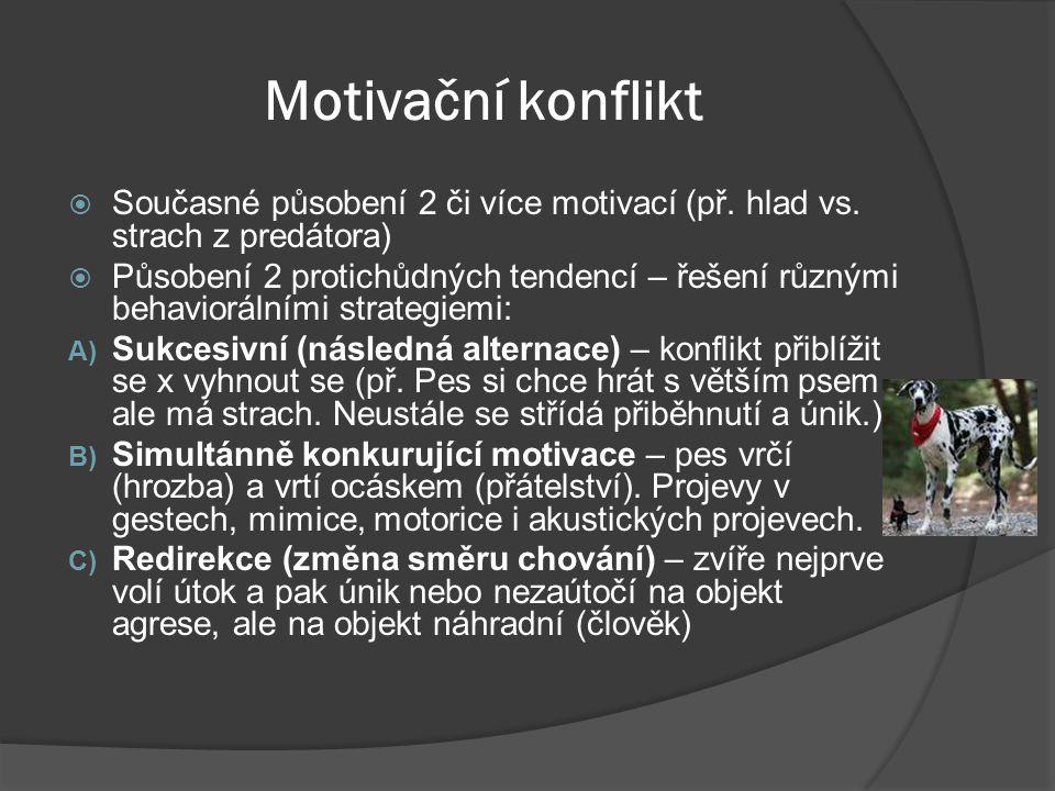Motivační konflikt  Současné působení 2 či více motivací (př. hlad vs. strach z predátora)  Působení 2 protichůdných tendencí – řešení různými behav