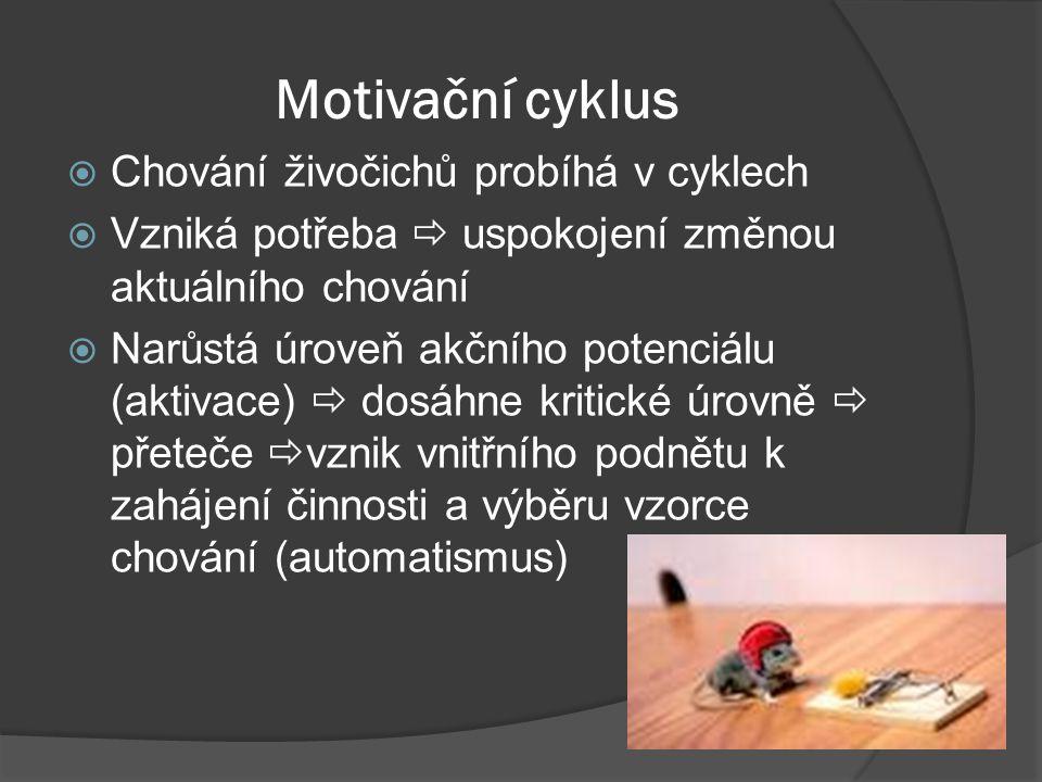 Motivační cyklus  Chování živočichů probíhá v cyklech  Vzniká potřeba  uspokojení změnou aktuálního chování  Narůstá úroveň akčního potenciálu (aktivace)  dosáhne kritické úrovně  přeteče  vznik vnitřního podnětu k zahájení činnosti a výběru vzorce chování (automatismus)