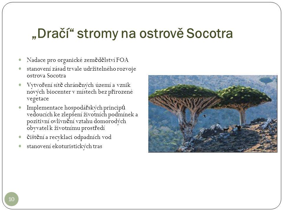 """""""Dračí"""" stromy na ostrově Socotra 10 Nadace pro organické zem ě d ě lství FOA stanovení zásad trvale udržitelného rozvoje ostrova Socotra Vytvo ř ení"""