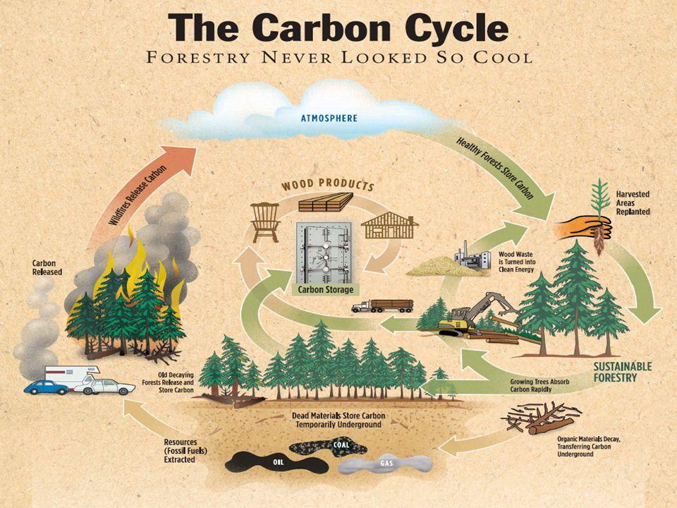 Koloběh kyslíku Kyslík v biosféře je biologického původu; je základním produktem fotosyntézy jeho koloběh v ekosystémech je rovněž silně ovlivněn životními procesy - fotosyntézou je uvolňován, dýcháním a rozkladem odumřelých organismů se spotřebovává.