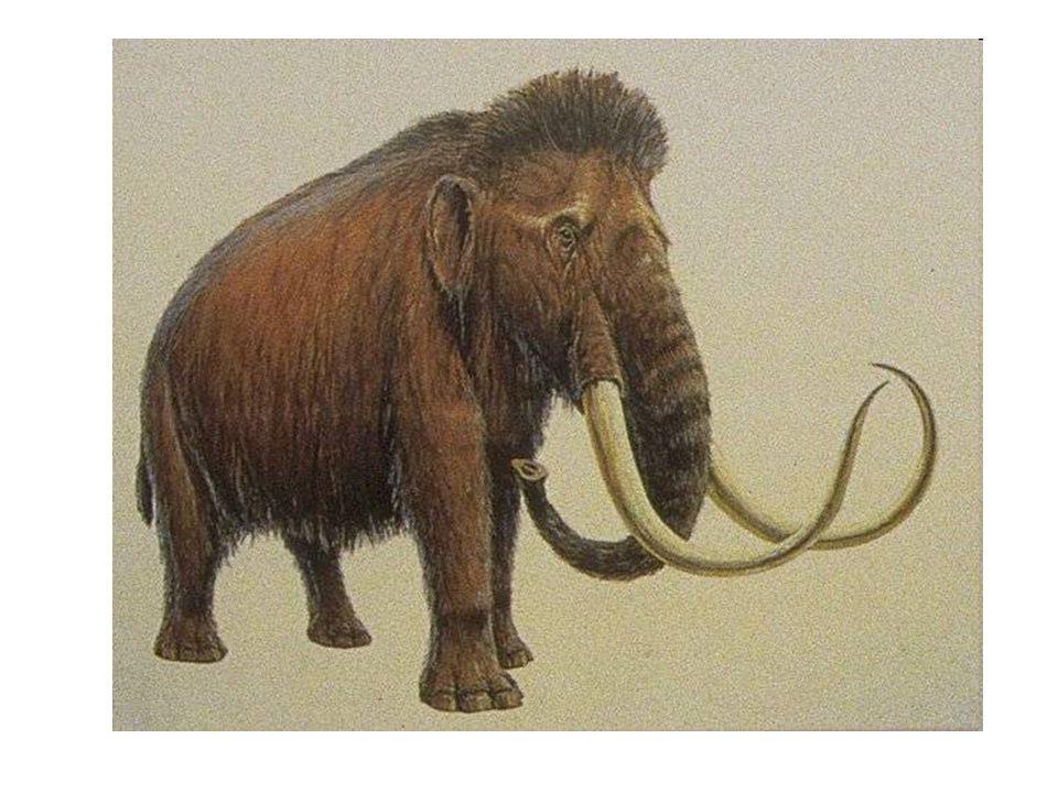 Nálezy mamutů ve zmrzlé půdě