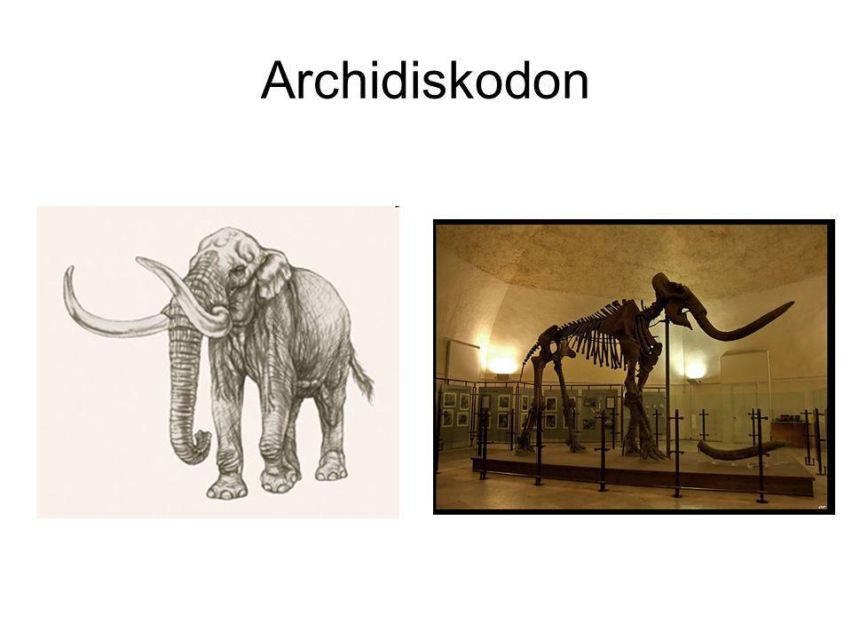 Archidiskodon