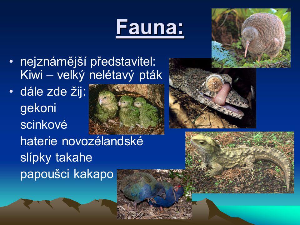 Fauna: nejznámější představitel: Kiwi – velký nelétavý pták dále zde žij: gekoni scinkové haterie novozélandské slípky takahe papoušci kakapo
