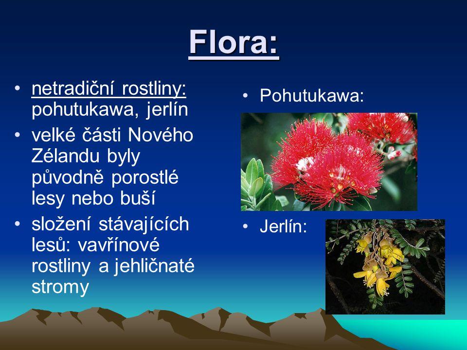 Flora: netradiční rostliny: pohutukawa, jerlín velké části Nového Zélandu byly původně porostlé lesy nebo buší složení stávajících lesů: vavřínové rostliny a jehličnaté stromy Pohutukawa: Jerlín: