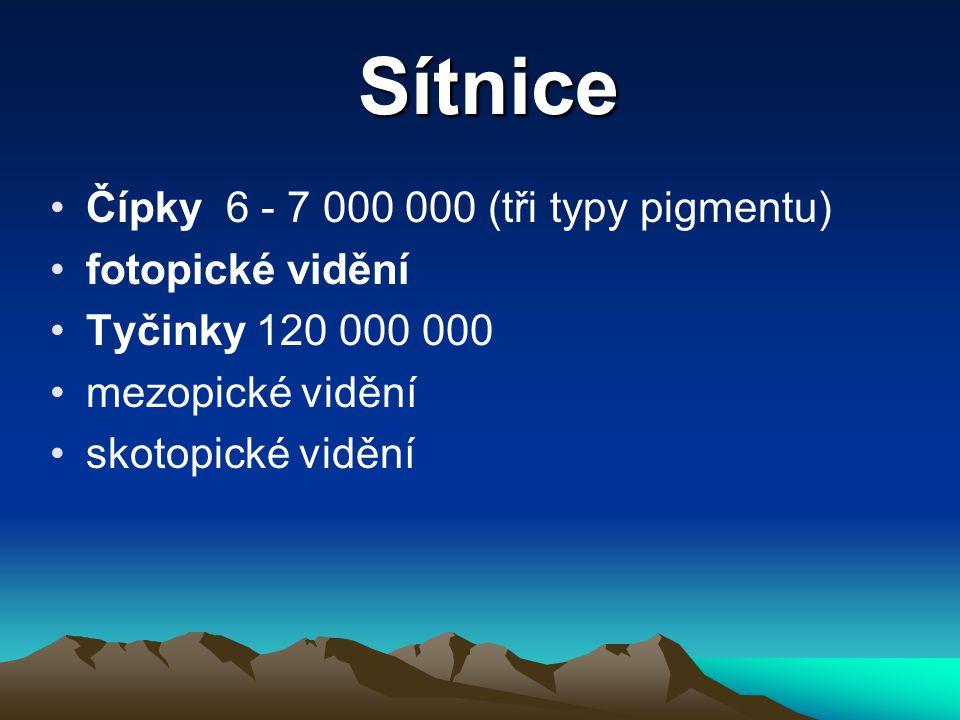 Sítnice Čípky 6 - 7 000 000 (tři typy pigmentu) fotopické vidění Tyčinky 120 000 000 mezopické vidění skotopické vidění