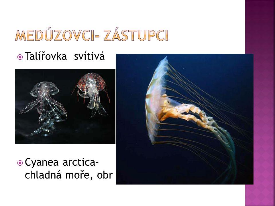  Talířovka svítivá  Cyanea arctica- chladná moře, obr