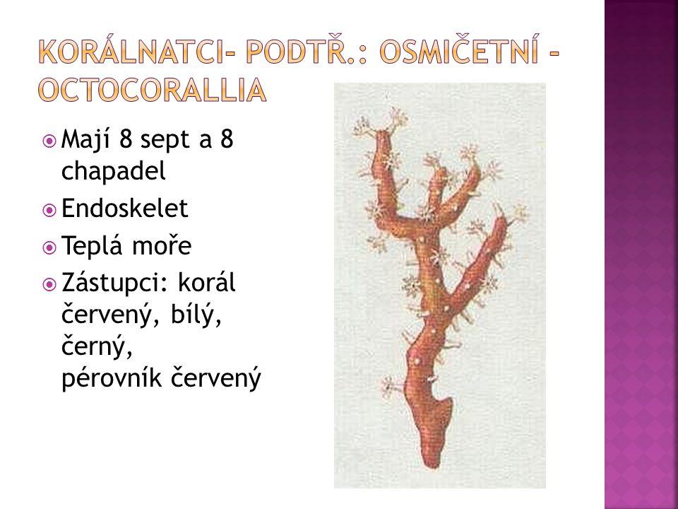  Mají 8 sept a 8 chapadel  Endoskelet  Teplá moře  Zástupci: korál červený, bílý, černý, pérovník červený