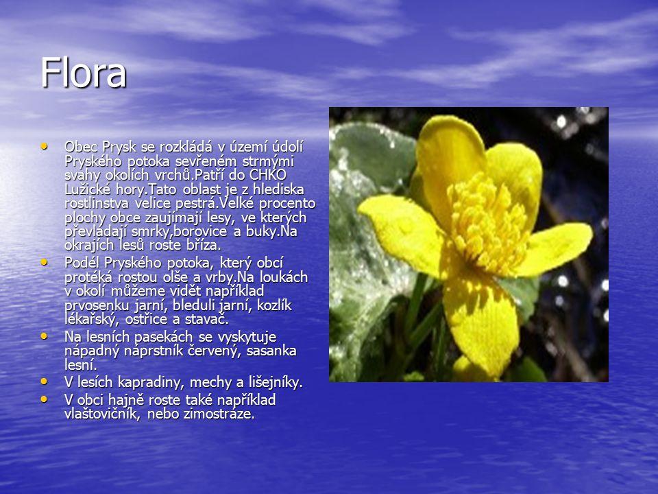 Flora Obec Prysk se rozkládá v území údolí Pryského potoka sevřeném strmými svahy okolích vrchů.Patří do CHKO Lužické hory.Tato oblast je z hlediska r