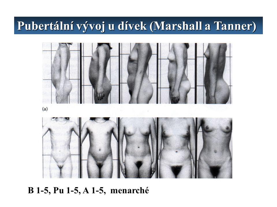 Pubertální vývoj u dívek (Marshall a Tanner) B 1-5, Pu 1-5, A 1-5, menarché