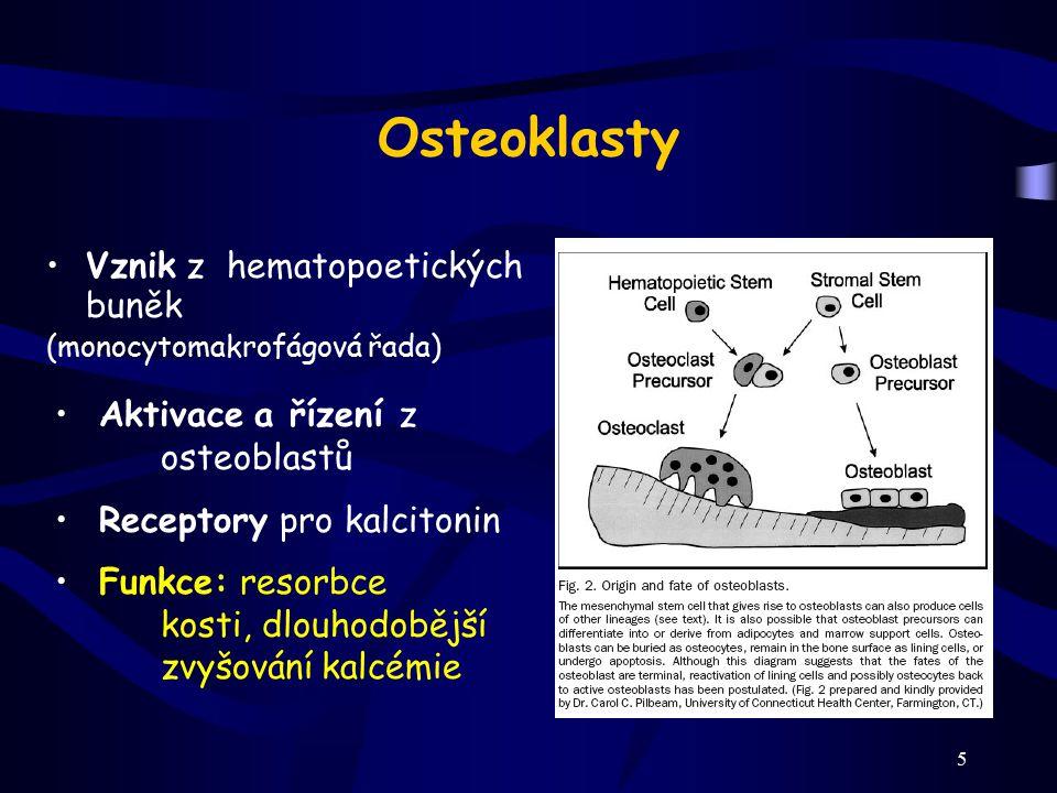 5 Osteoklasty Vznik z hematopoetických buněk (monocytomakrofágová řada) Aktivace a řízení z osteoblastů Receptory pro kalcitonin Funkce: resorbce kost