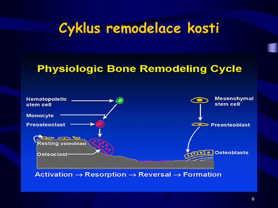 9 Cyklus remodelace kosti