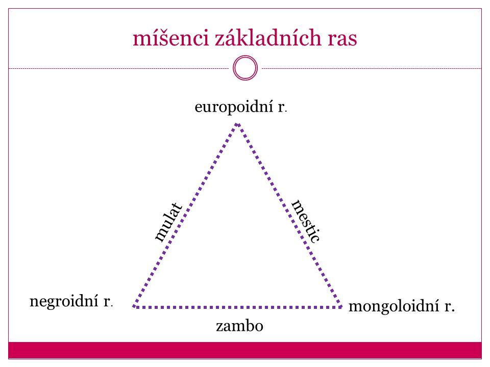 europoidní r. negroidní r. mongoloidní r. mulat mestic zambo míšenci základních ras