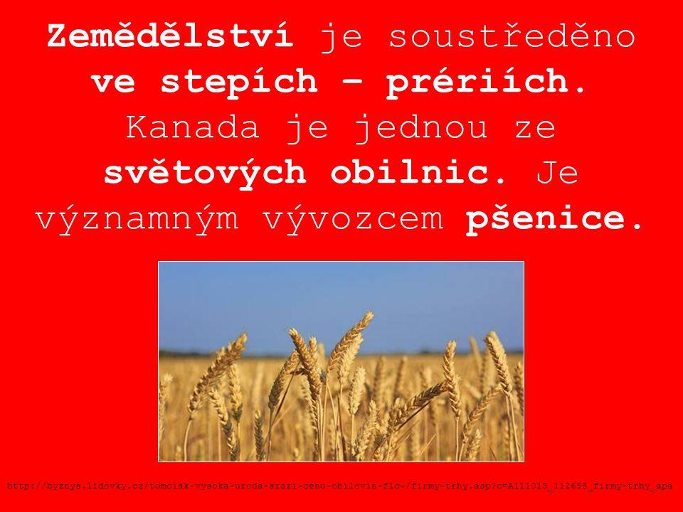Zemědělství je soustředěno ve stepích – prériích. Kanada je jednou ze světových obilnic. Je významným vývozcem pšenice. http://byznys.lidovky.cz/tomci
