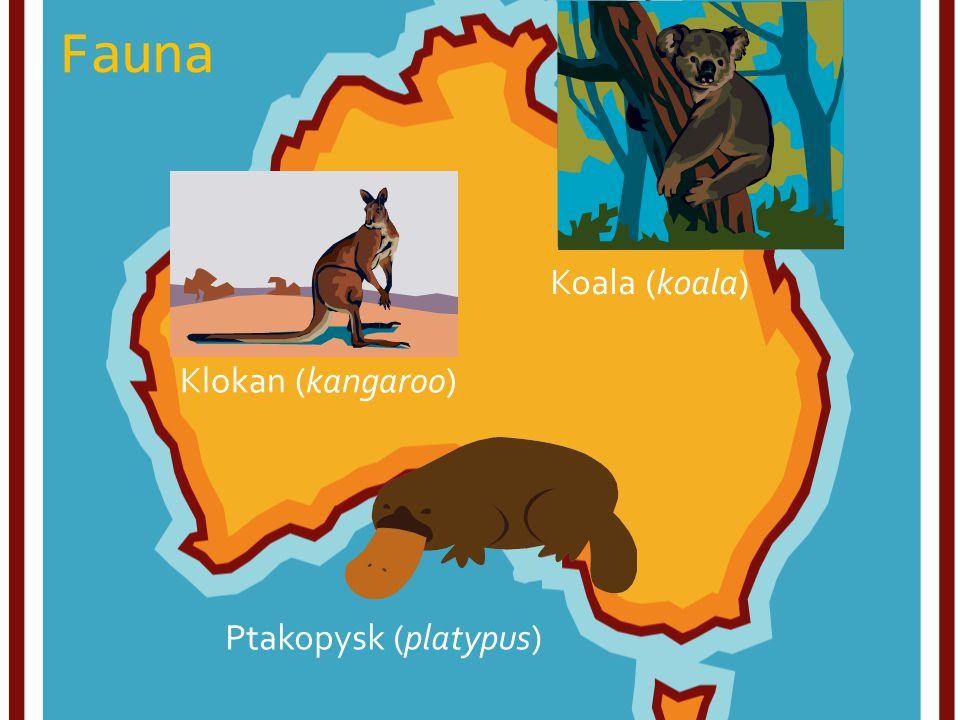 Fauna Klokan (kangaroo) Koala (koala) Ptakopysk (platypus)