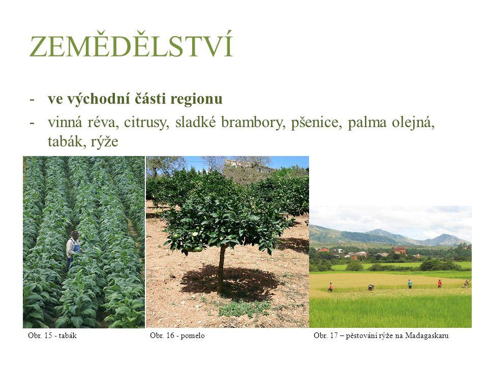 ZEMĚDĚLSTVÍ -ve východní části regionu -vinná réva, citrusy, sladké brambory, pšenice, palma olejná, tabák, rýže Obr. 15 - tabák Obr. 16 - pomelo Obr.