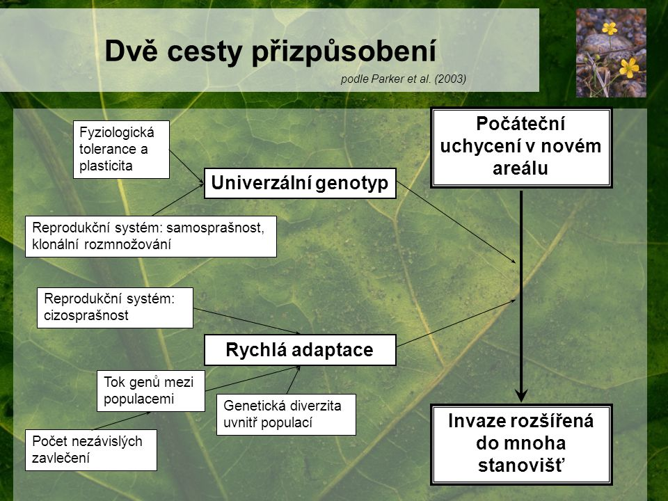 Dvě cesty přizpůsobení Fyziologická tolerance a plasticita Reprodukční systém: samosprašnost, klonální rozmnožování Univerzální genotyp Reprodukční sy