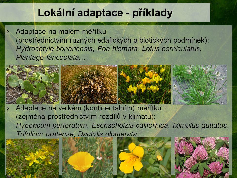 Lokální adaptace - příklady  Adaptace na malém měřítku (prostřednictvím různých edafických a biotických podmínek): Hydrocotyle bonariensis, Poa hiema