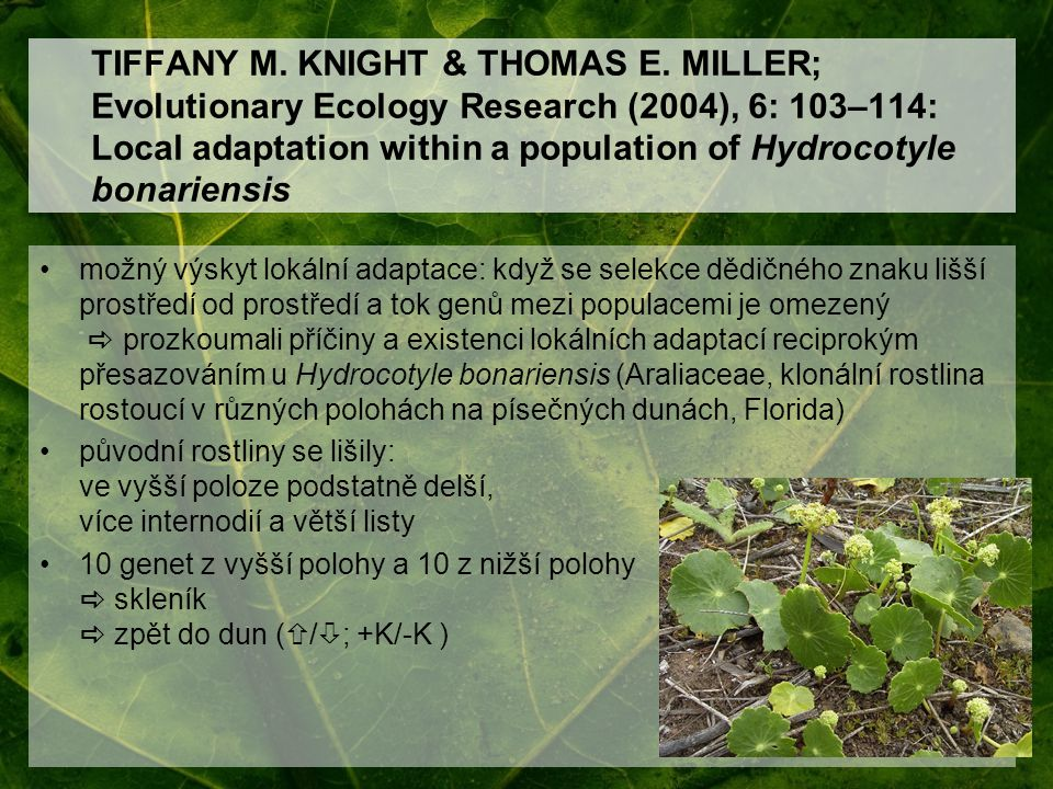 TIFFANY M. KNIGHT & THOMAS E. MILLER; Evolutionary Ecology Research (2004), 6: 103–114: Local adaptation within a population of Hydrocotyle bonariensi