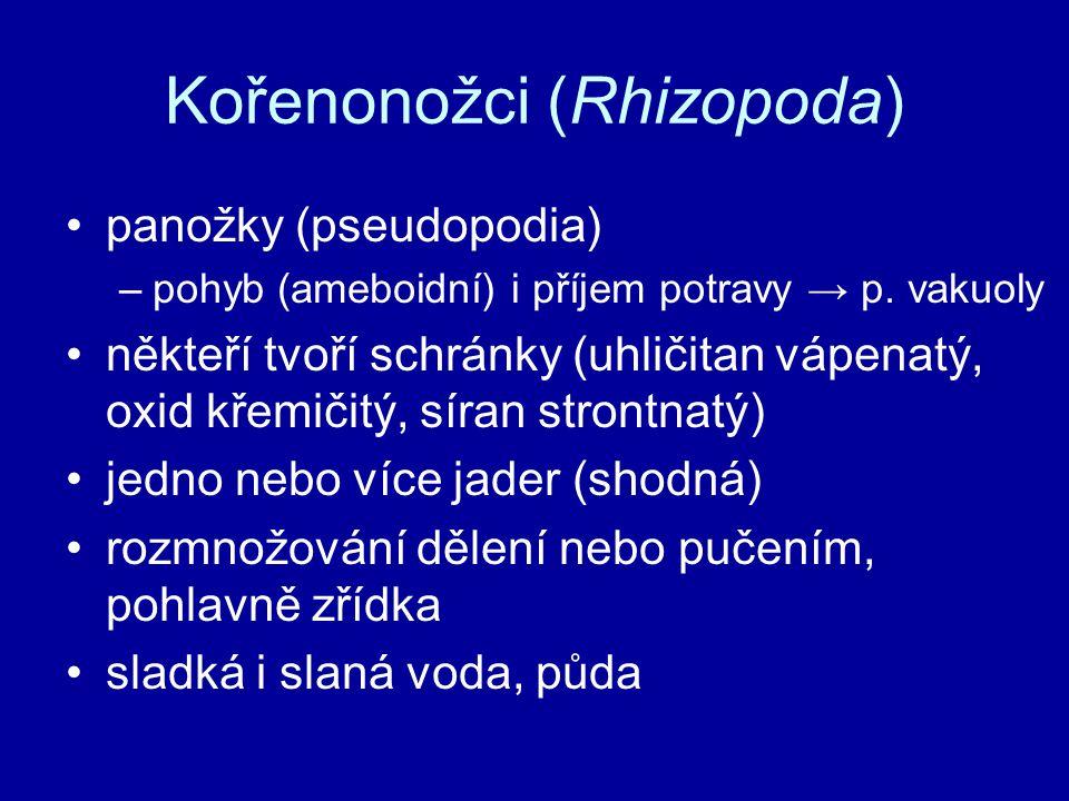 Kořenonožci (Rhizopoda) panožky (pseudopodia) –pohyb (ameboidní) i příjem potravy → p. vakuoly někteří tvoří schránky (uhličitan vápenatý, oxid křemič