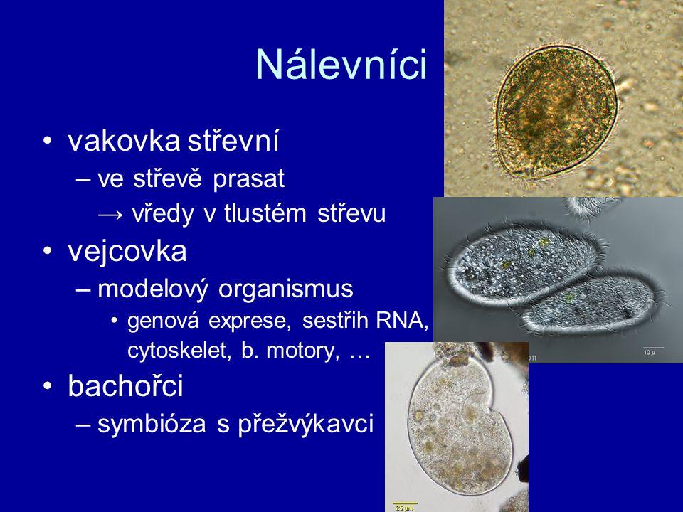 Nálevníci vakovka střevní –ve střevě prasat → vředy v tlustém střevu vejcovka –modelový organismus genová exprese, sestřih RNA, cytoskelet, b. motory,