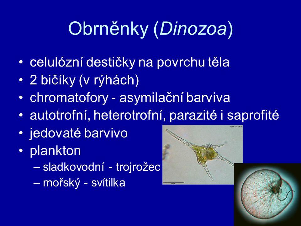 Obrněnky (Dinozoa) celulózní destičky na povrchu těla 2 bičíky (v rýhách) chromatofory - asymilační barviva autotrofní, heterotrofní, parazité i sapro