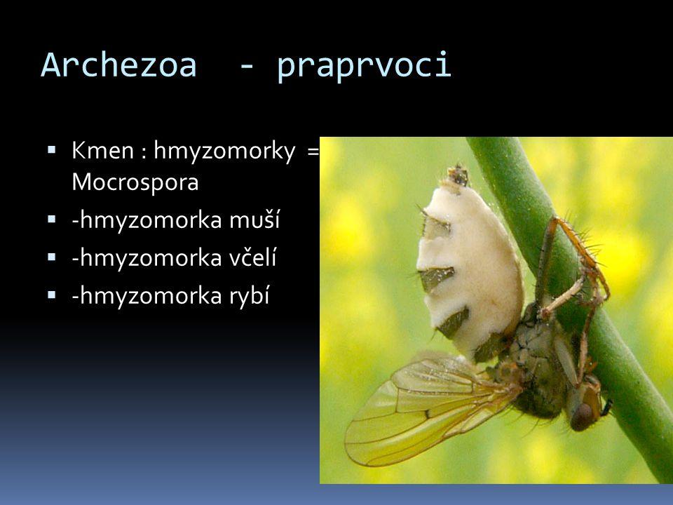Archezoa - praprvoci  Kmen : hmyzomorky = Mocrospora  -hmyzomorka muší  -hmyzomorka včelí  -hmyzomorka rybí