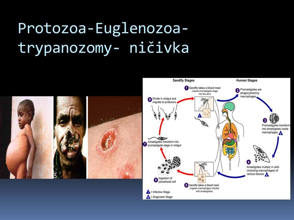 Protozoa-Euglenozoa- trypanozomy- ničivka