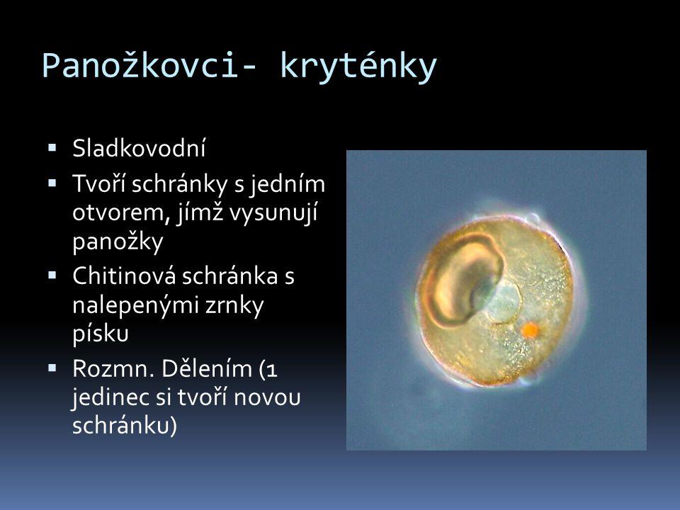 Panožkovci- kryténky  Sladkovodní  Tvoří schránky s jedním otvorem, jímž vysunují panožky  Chitinová schránka s nalepenými zrnky písku  Rozmn. Děl
