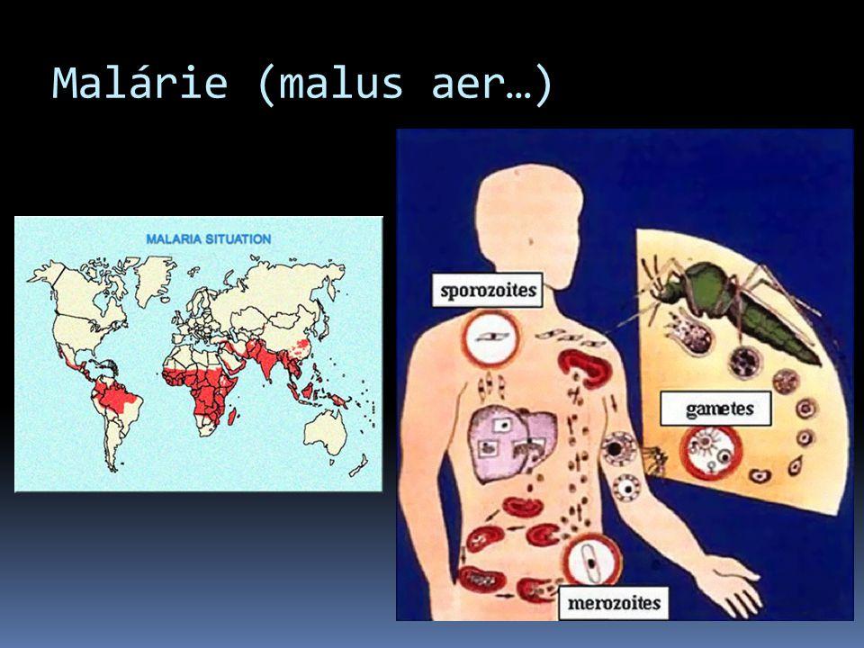 Malárie (malus aer…)