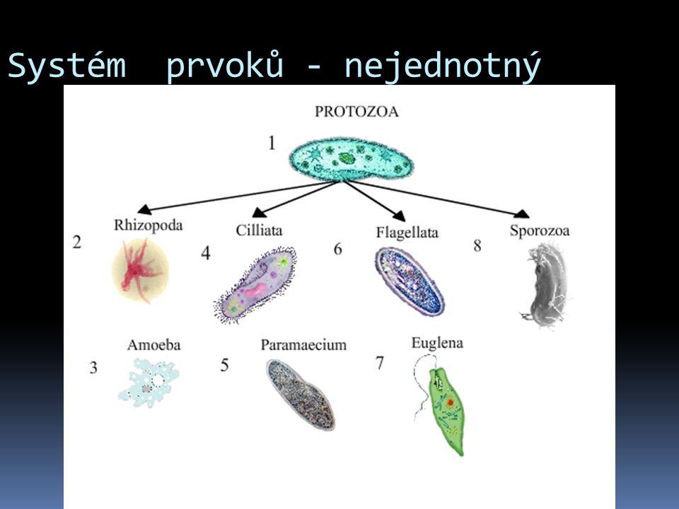 Systém prvoků: Archezoa - praprvoci  Kmen: panoženky= Archamoebae např.