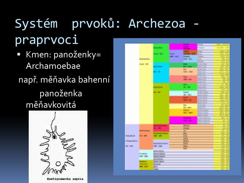 Systém prvoků: Archezoa - praprvoci  Kmen: panoženky= Archamoebae např. měňavka bahenní panoženka měňavkovitá