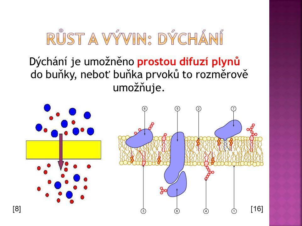 Dýchání je umožněno prostou difuzí plynů do buňky, neboť buňka prvoků to rozměrově umožňuje. [8][16]