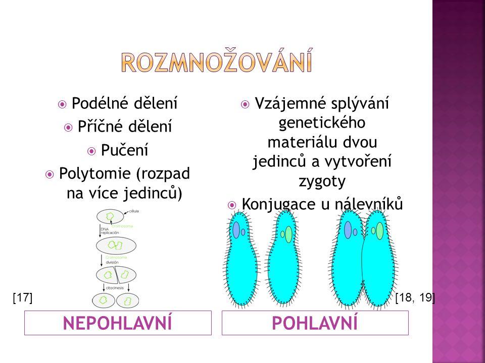 NEPOHLAVNÍPOHLAVNÍ  Podélné dělení  Příčné dělení  Pučení  Polytomie (rozpad na více jedinců)  Vzájemné splývání genetického materiálu dvou jedin