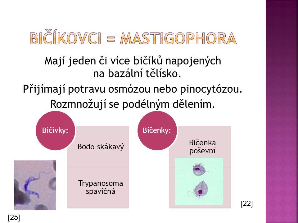Mají jeden či více bičíků napojených na bazální tělísko. Přijímají potravu osmózou nebo pinocytózou. Rozmnožují se podélným dělením. Bodo skákavý Tryp