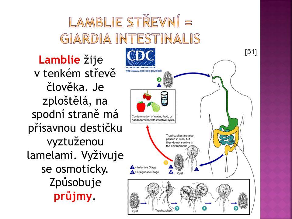 Lamblie žije v tenkém střevě člověka. Je zploštělá, na spodní straně má přísavnou destičku vyztuženou lamelami. Vyživuje se osmoticky. Způsobuje průjm