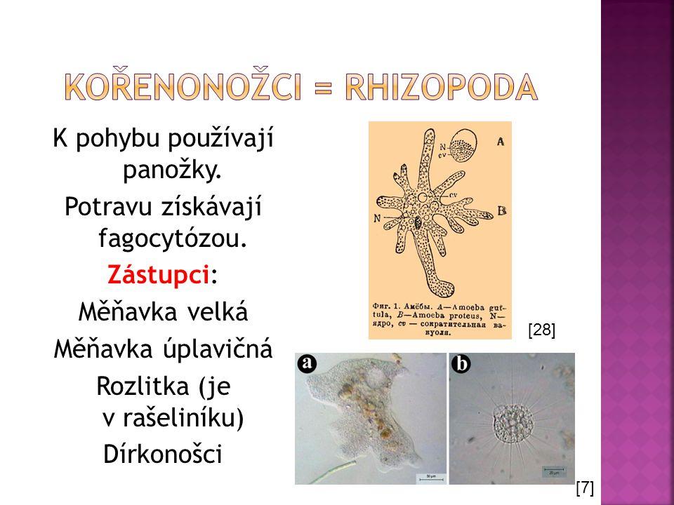 K pohybu používají panožky. Potravu získávají fagocytózou. Zástupci: Měňavka velká Měňavka úplavičná Rozlitka (je v rašeliníku) Dírkonošci [28] [7]