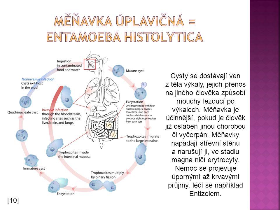 Cysty se dostávají ven z těla výkaly, jejich přenos na jiného člověka způsobí mouchy lezoucí po výkalech. Měňavka je účinnější, pokud je člověk již os
