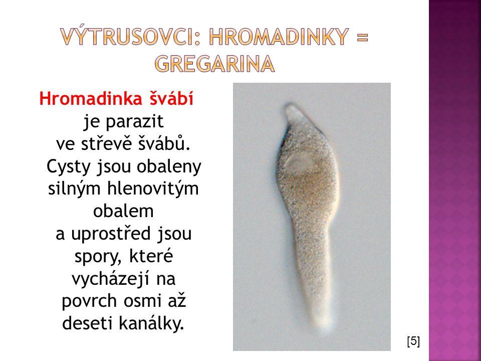 Hromadinka švábí je parazit ve střevě švábů. Cysty jsou obaleny silným hlenovitým obalem a uprostřed jsou spory, které vycházejí na povrch osmi až des