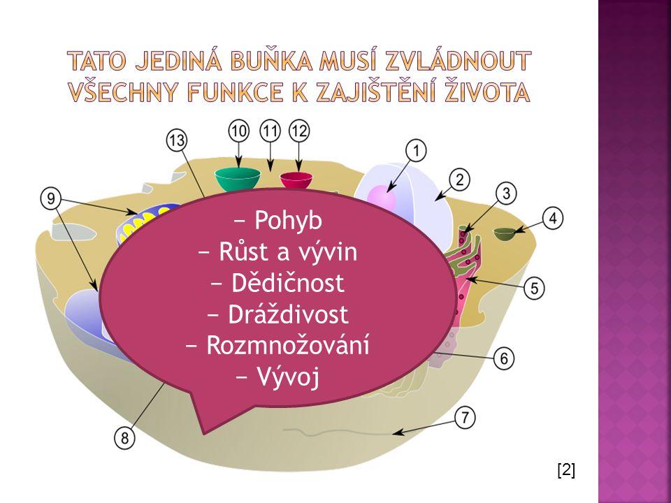 − Pohyb − Růst a vývin − Dědičnost − Dráždivost − Rozmnožování − Vývoj [2]