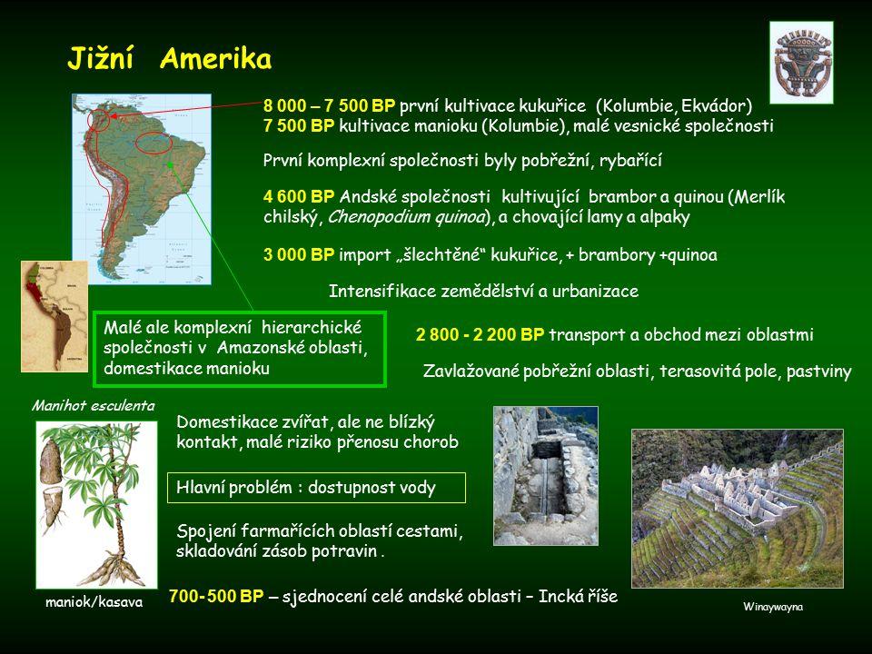 """První komplexní společnosti byly pobřežní, rybařící Domestikace zvířat, ale ne blízký kontakt, malé riziko přenosu chorob Jižní Amerika 4 600 BP Andské společnosti kultivující brambor a quinou (Merlík chilský, Chenopodium quinoa), a chovající lamy a alpaky 3 000 BP import """"šlechtěné kukuřice, + brambory +quinoa 8 000 – 7 500 BP první kultivace kukuřice (Kolumbie, Ekvádor) 7 500 BP kultivace manioku (Kolumbie), malé vesnické společnosti Malé ale komplexní hierarchické společnosti v Amazonské oblasti, domestikace manioku Manihot esculenta Intensifikace zemědělství a urbanizace Zavlažované pobřežní oblasti, terasovitá pole, pastviny 2 800 - 2 200 BP transport a obchod mezi oblastmi Hlavní problém : dostupnost vody Spojení farmařících oblastí cestami, skladování zásob potravin."""