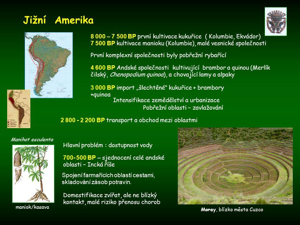 """První komplexní společnosti byly pobřežní rybařící Domestifikace zvířat, ale ne blízký kontakt, malé riziko přenosu chorob Jižní Amerika 4 600 BP Andské společnosti kultivující brambor a quinou (Merlík čilský, Chenopodium quinoa), a chovající lamy a alpaky 3 000 BP import """"šlechtěné kukuřice + brambory +quinoa 8 000 – 7 500 BP první kultivace kukuřice ( Kolumbie, Ekvádor) 7 500 BP kultivace manioku (Kolumbie), malé vesnické společnosti Manihot esculenta Pobřežní oblasti – zavlažování Intensifikace zemědělství a urbanizace 2 800 - 2 200 BP transport a obchod mezi oblastmi Hlavní problém : dostupnost vody Spojení farmařících oblastí cestami, skladování zásob potravin."""