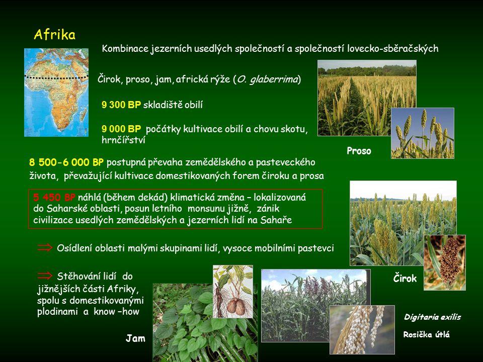 Afrika 5 450 BP náhlá (během dekád) klimatická změna – lokalizovaná do Saharské oblasti, posun letního monsunu jižně, zánik civilizace usedlých zemědělských a jezerních lidí na Sahaře 9 300 BP skladiště obilí Digitaria exilis Rosička útlá Čirok, proso, jam, africká rýže (O.