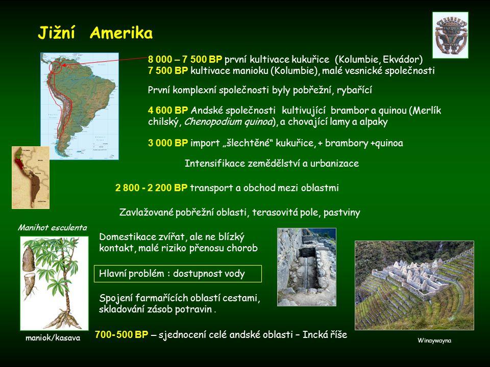 """První komplexní společnosti byly pobřežní, rybařící Domestikace zvířat, ale ne blízký kontakt, malé riziko přenosu chorob Jižní Amerika 4 600 BP Andské společnosti kultivující brambor a quinou (Merlík chilský, Chenopodium quinoa), a chovající lamy a alpaky 3 000 BP import """"šlechtěné kukuřice, + brambory +quinoa 8 000 – 7 500 BP první kultivace kukuřice (Kolumbie, Ekvádor) 7 500 BP kultivace manioku (Kolumbie), malé vesnické společnosti Manihot esculenta Intensifikace zemědělství a urbanizace Zavlažované pobřežní oblasti, terasovitá pole, pastviny 2 800 - 2 200 BP transport a obchod mezi oblastmi Hlavní problém : dostupnost vody Spojení farmařících oblastí cestami, skladování zásob potravin."""
