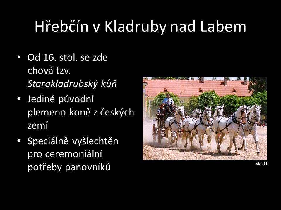 Hřebčín v Kladruby nad Labem Od 16. stol. se zde chová tzv. Starokladrubský kůň Jediné původní plemeno koně z českých zemí Speciálně vyšlechtěn pro ce