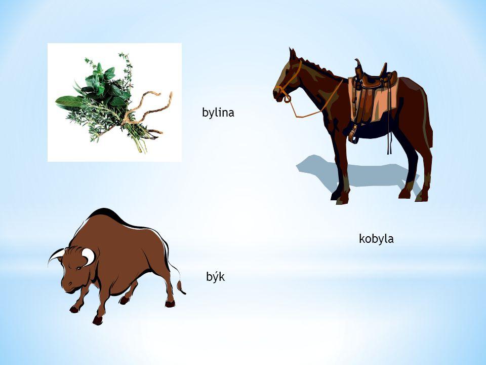 bylina kobyla býk