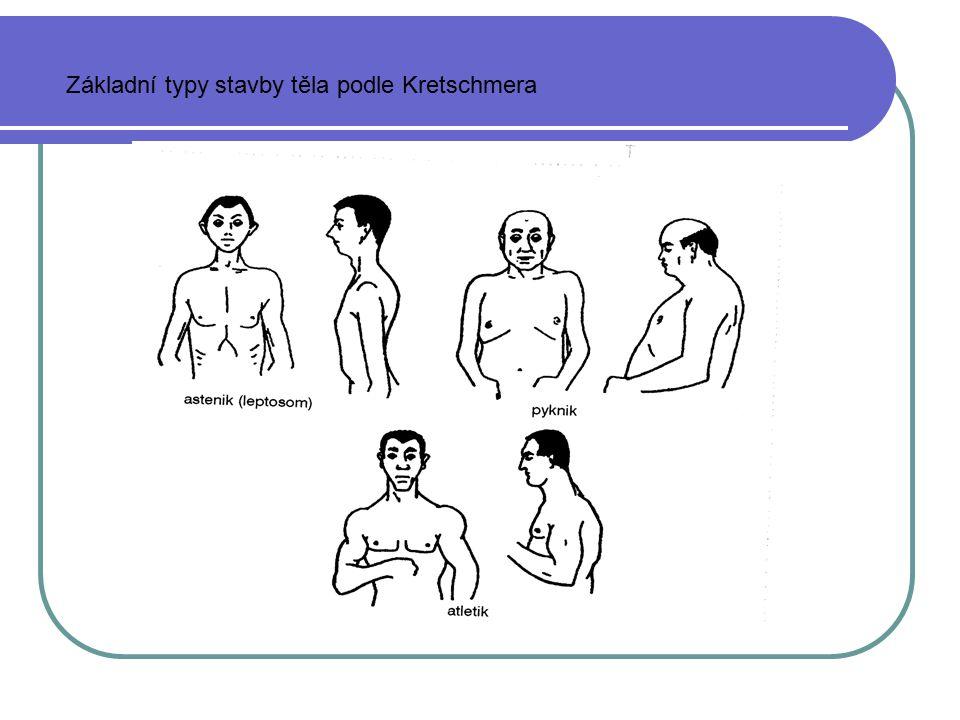 Základní typy stavby těla podle Kretschmera