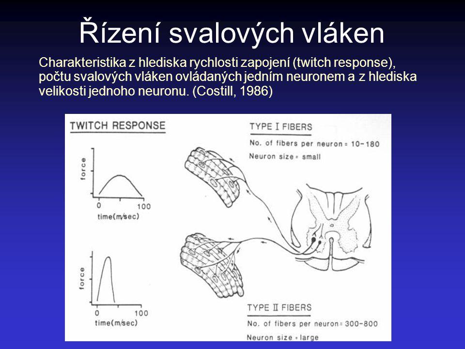Řízení svalových vláken Charakteristika z hlediska rychlosti zapojení (twitch response), počtu svalových vláken ovládaných jedním neuronem a z hledisk