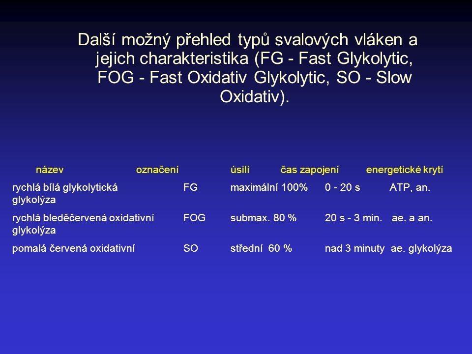 název označeníúsilí čas zapojení energetické krytí rychlá bílá glykolytická FG maximální 100% 0 - 20 s ATP, an. glykolýza rychlá bleděčervená oxidativ