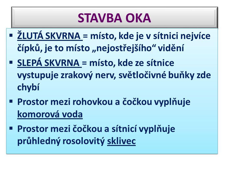 """STAVBA OKA  ŽLUTÁ SKVRNA = místo, kde je v sítnici nejvíce čípků, je to místo """"nejostřejšího"""" vidění  SLEPÁ SKVRNA = místo, kde ze sítnice vystupuje"""